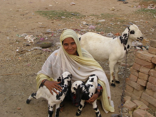 Woman with goats - A Farz Foundation project