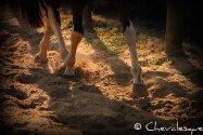 Galerie le cheval en détails