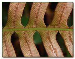Amazing frond pattern