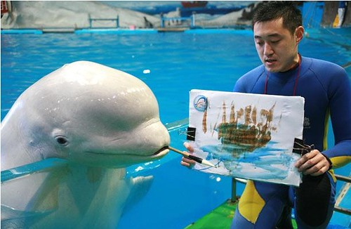 beluga whale drawing. Super Painting Beluga Whale