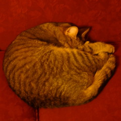 catpillow