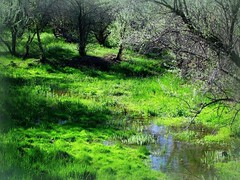 Earth Day (Nature_Deb) Tags: morning blue trees light sky reflection green nature grass leaves landscape spring stream pasture sunkissed wildlifepreserve russianolive