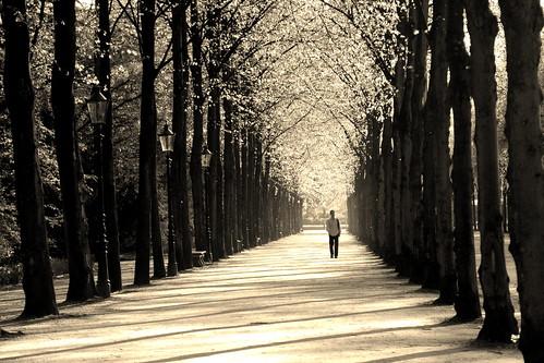 [免费照片] 自然・風景, 人与风景, 树, 道, 乌贼, 201004241300