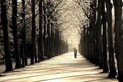 [フリー画像] 自然・風景, 人と風景, 樹木, 道, セピア, 201004241300