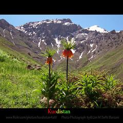 """""""Kurdistan Flowers"""" Nature Landscape"""