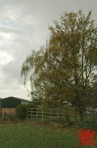 Farm and Fences