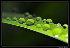 Water Drops (cquintin) Tags: water drops gouttes