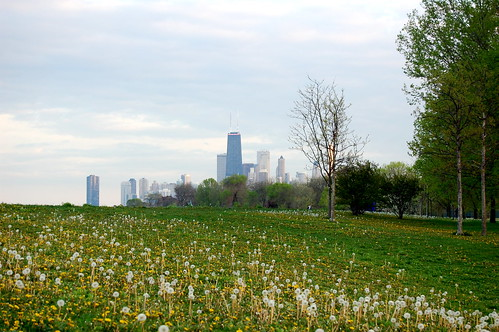 dandelions & skyline