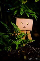 Danboard (darktiger) Tags: japanese robot manga suit cardboard danbo abigfave danboard yotsuba1 actionfigure