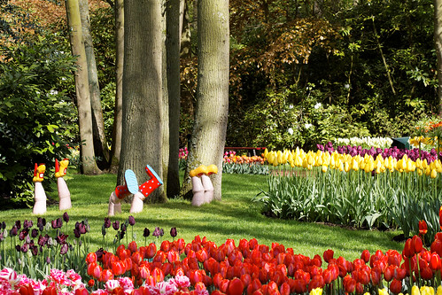 Keukenhof - Looking at Bulbs