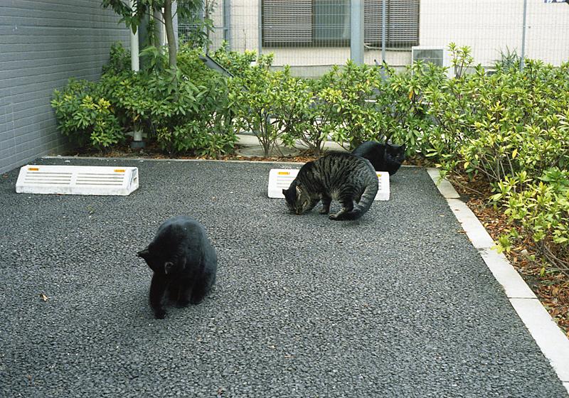 駐車場の猫だまり