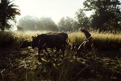Ploughman (Muria 14) (Collin Key (away)) Tags: india youth jungle distillery ind adivasi chhattisgarh muria bastar youthhouse ghotul collinkey chelik nayanar gondtribes tribalpeopleofindia villagedormitory motiari kingdomoftheyoung remawand verrierelwin rodericknight