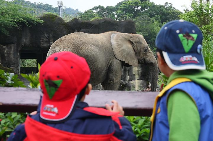 台北木柵動物園0031