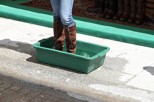 fancy-boots