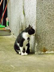 Cat (Dahial) Tags: olympus     sp570uz
