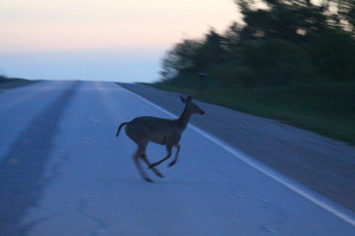 05-16-deer3