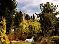 Unicorn / Jednoroec (raphic :)) Tags: sky horse white tree green nature collage garden botanical poland polska ps unicorn zielony lublin drzewo ko niebo drzewa ogrd biay botaniczny raphic jednoroec