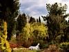 Unicorn / Jednorożec (raphic :)) Tags: sky horse white tree green nature collage garden botanical poland polska ps unicorn zielony lublin drzewo koń niebo drzewa ogród biały botaniczny raphic jednorożec