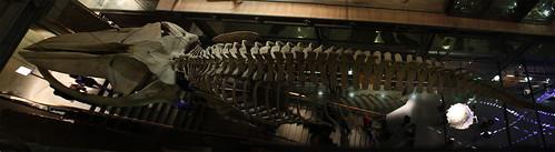 Panorama Baleine