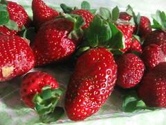 20100527_strawberry