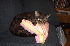 Duncan settles on the triangle pillow