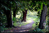 Path into the Light (Dave Hilditch Photography) Tags: trees landscapes woods paths legacy essex forests theworldwelivein footpaths kartpostal bej abigfave theunforgettablepictures dragondaggerphoto dragondaggeraward artofimages qualitysurroundings yourwonderland magicunicornverybest magicunicornmasterpiece