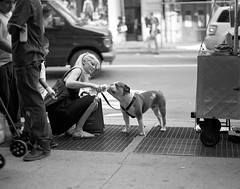 thirsty (davebias) Tags: street nyc blackandwhite bulldog