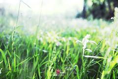 (Dann.Gooding) Tags: light summer grass bokeh warmth multiexposure