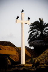 Harvesters of death (Tannenberg) Tags: nature death cross venezuela vultures vulture