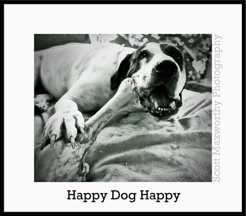 Happy Dog Happy