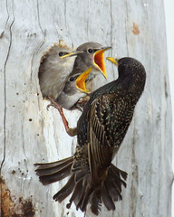 Feeding Time (claybuster1(doing good just very busy)) Tags: specanimal michiganbirds 100commentgroup tripleniceshot mygearandmepremium mygearandmebronze mygearandmesilver mygearandmegold mygearandmeplatinum mygearandmediamond 4timesasnice 6timesasnice 5timesasnice 7timesasnice