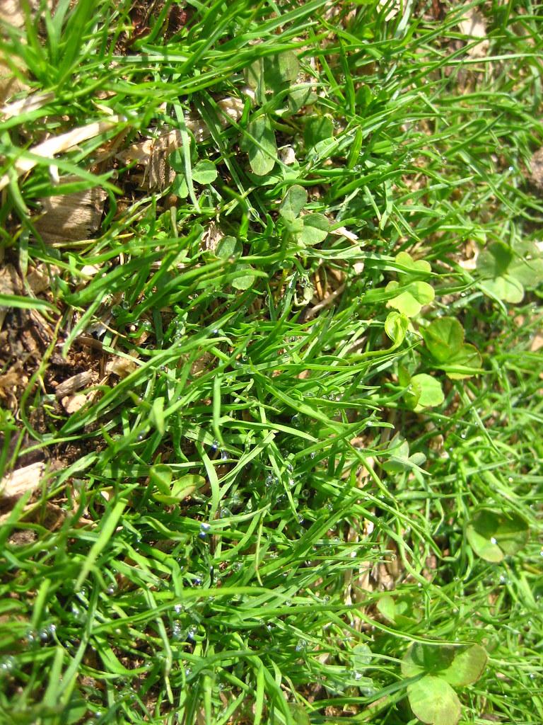 трава у дома, утренняя роса во дворе