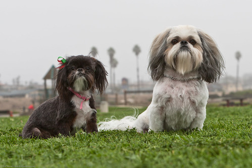 BEST of 8 pics. Virginia Hiramatsu's Dogs (L-R) Missy and Puzzle