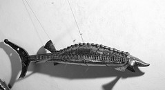 esturgeon (pedrobigore) Tags: sculpture chien table bateau poisson métal fer masque acier danseuse récup volant bestioles récupération soudure soudeur féraille akouma hipocamppe