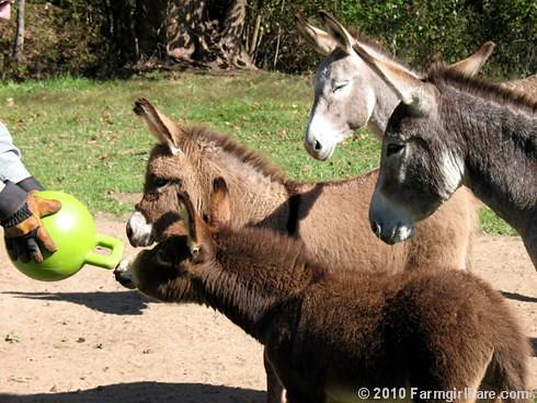 Donkey Ball 9