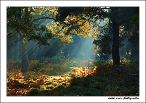 arne forest light shafts[EXPLORED] - neath stan the man