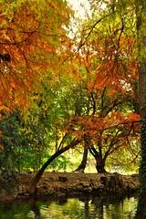 ...Milano si veste d'autunno... (Princess Sissi) Tags: circolofotograficopaullese