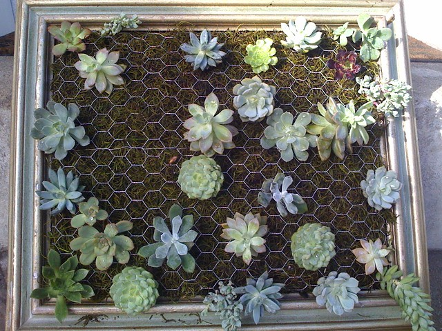 also picked up about 15 more succulents from the 99 cent store ...