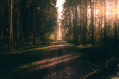 Shadows And Lights (HatCat Photography) Tags: mist landscape fog winter nature light guidance tree road path fall leaf season wood sony dark flare forrest shadows dawn panoramic outdoors sunflare vsco no person wbpa