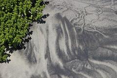 Oceanside / Netarts Bay beach has dark and light sand (nikname) Tags: oceansidebeach oceanside netartsbayoregon oregonbeaches beach sand sanddesigns sandpatterns