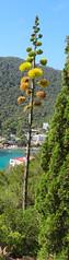 edit-0320 (Mick_Gallagher_1959) Tags: ibiza calallonga sun beach santaeulalia