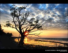 Sunday Sunset @ Fort Cochin, Kerala (Smevin Paul - Thrisookaran !! www.smevin.com) Tags: sunset sky sun india tree colors silhouette clouds paul photography nikon photos fort vibrant awesome sunday kerala shore lonely cochi cochin ernakulam smevin smevinpaul d40x malayalikkoottam smevins thrisookaran wwwsmevincom discoverplanet sundaysunsetfortcochin