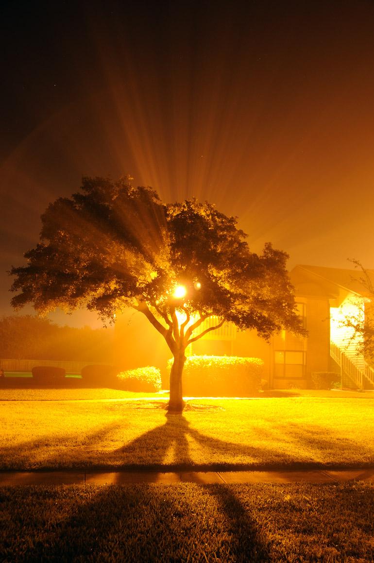 tree_fog_0015
