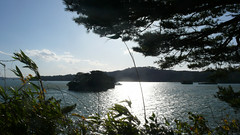 (woguwog) Tags: sea japan autumnleaves matsushima
