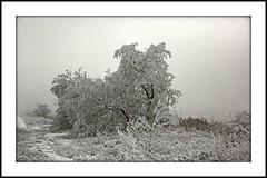 _MG_8738E (Ralston Images) Tags: winter snow tree frozen utah blizzard jrphotography jasonralstonphotography