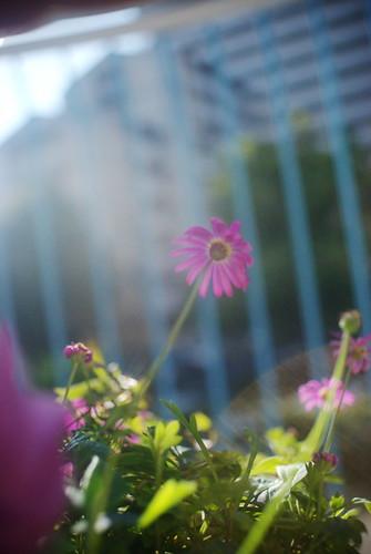our small garden #3