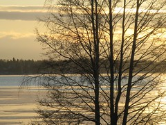 Tuusulanjrvi (valonsa) Tags: winter lake sunshine gold colours talvi jrvi kulta vrit auringonpaiste