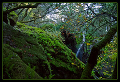 Waterfall in the Woods (karith) Tags: california green nature canon landscape waterfall woods mttam marincounty mttamalpais karith