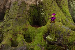 Gnome Home (elhawk (away for a while)) Tags: home gnome roots mossy beech grimblegromble