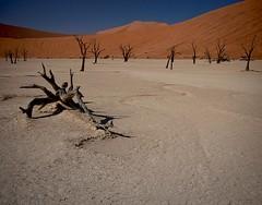 Sossusvlei/Deadvlei - II (Edith,ph) Tags: africa trees landscape desert dunes namibia sossusvlei deadvlei edithph selfdrivingnamibia